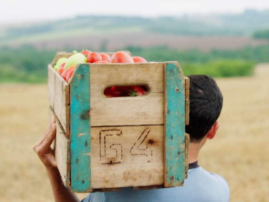 A young man holds a wooden crate of apples on his shoulder.