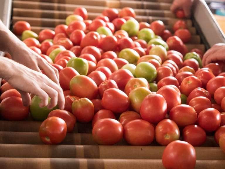 tomates sustentables